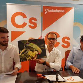 """Ciudadanos propondrá en Ayuntamiento y Diputación """"controlar la plaga de cotorras antes de que sea irreversible"""""""