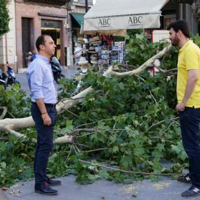 """Millán denuncia """"el daño al patrimonio por la caída de ramas que suponen un grave riesgo para las personas"""""""