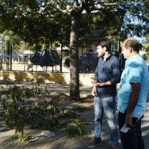 """Moyano (Cs) reclama """"el control urgente de la colonia de gatos salvajes"""" en Sevilla Este"""