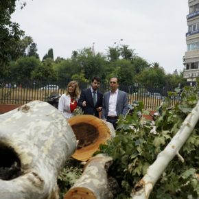"""Millán (Cs) denuncia la tala """"masiva"""" fuera de temporada """"que puede aumentar los árboles enfermos y el riesgo de caídas"""""""